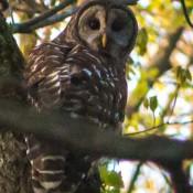 owl-3566
