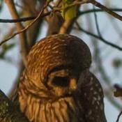 owl-3574