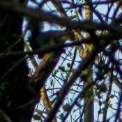 owl-3581